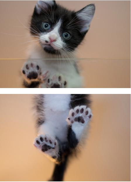 six little toe beans cuteoverload