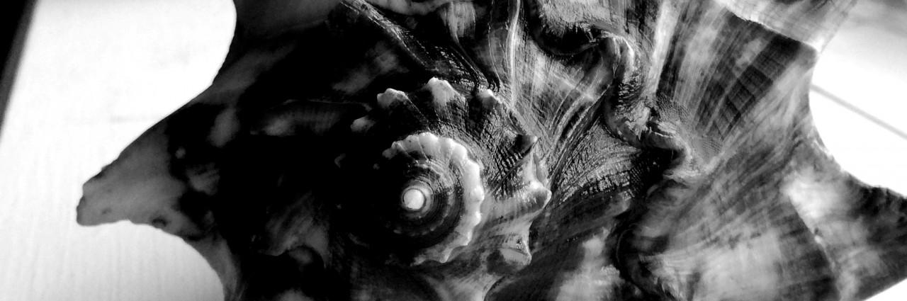 cropped-img_0445_21.jpg